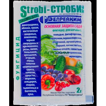 Строби (Беларусь) 2 г
