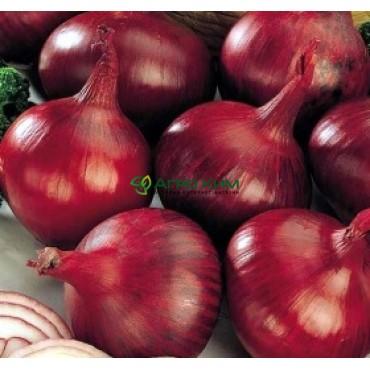 Лук севок Ред Барон 1 кг (Голландия)