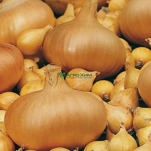 Лук севок Сеншуй 1 кг (Голландия)