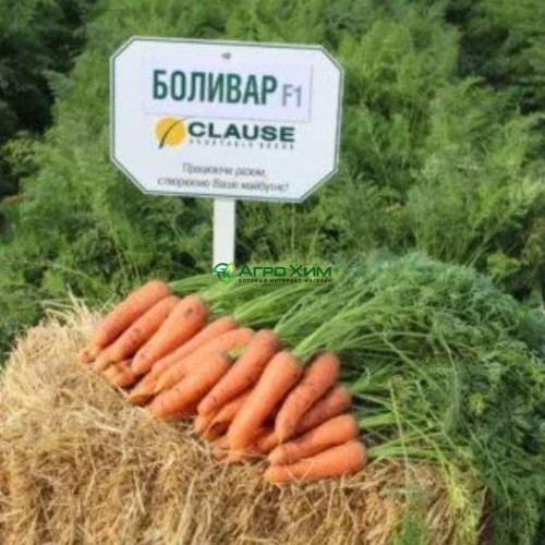 Морковь Боливар F1  (1,4 - 1,6) 100000 шт (Clause)