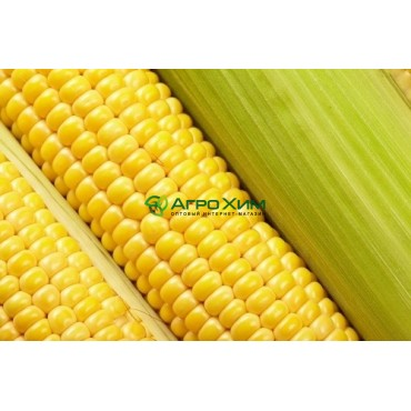 Кукуруза сахарная Бостон F1 100 000 шт (Syngenta)