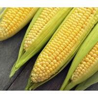 Кукуруза сахарная Элемент 100 000 шт (Syngenta)