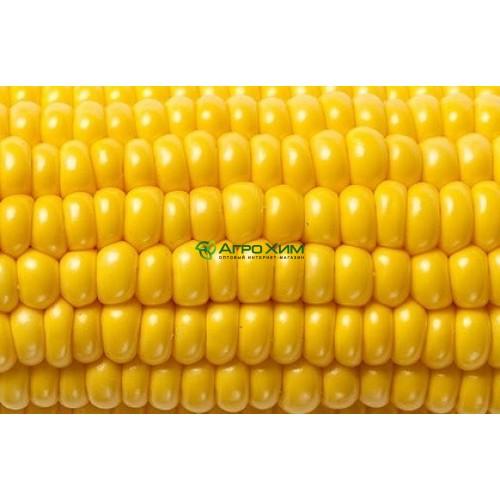 Кукуруза сахарная Мореленд (ГСС 1453) F1 100 000 шт (Syngenta)