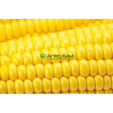 Кукуруза сахарная Оверленд F1 100 000 шт (Syngenta)