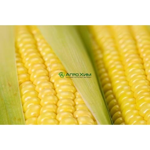 Кукуруза сахарная Шайнрок F1 100 000 шт (Syngenta)