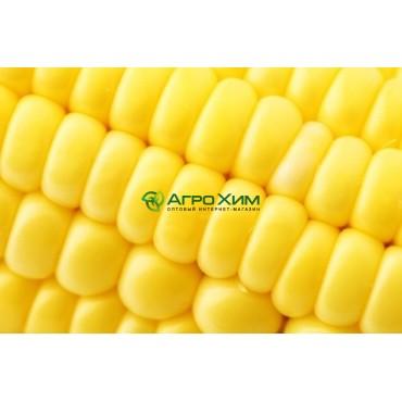 Кукуруза сахарная Свитстар F1 100 000 шт (Syngenta)